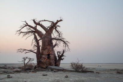 namibia_baobab_climb-1